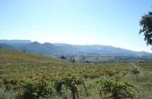 Die Landschaften des Rhonetals