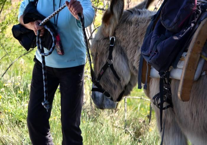 Ânes et Balades en Luberon (Walking with donkeys in the Luberon)