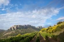 Weingut Domaine de Fenouillet