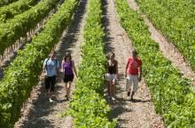 Weinkeller von Beaumont du Ventoux