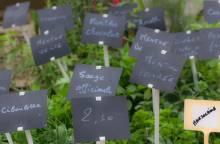 Bauernmarkt in Velleron