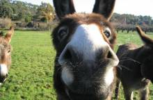 Donkey treks in Luberon