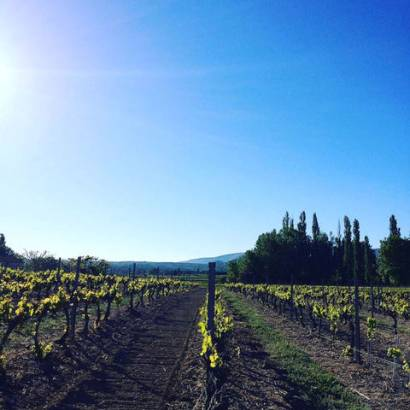 Walk on the wineyard of the Domaine La Garelle