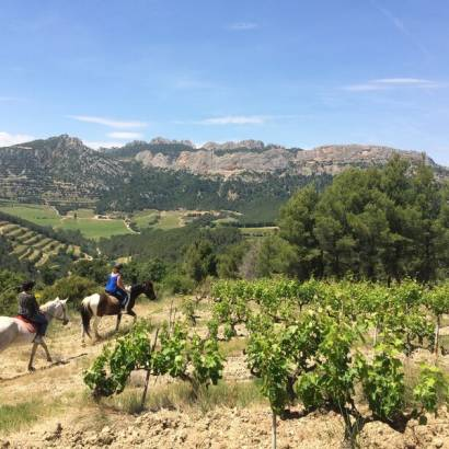 Discovering the wine country by horseback