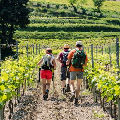 Hiking around the Dentelles with Gigondas la Cave