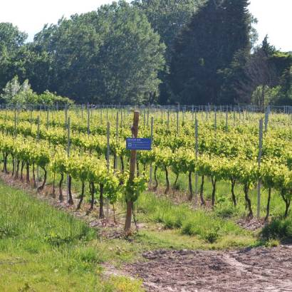 Vine collection of Domaine Fontaine du Clos