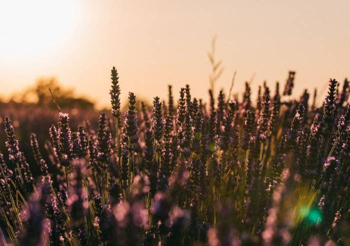 Rent Bike Luberon